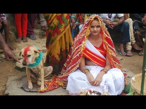 Download Woman Marries Dog In Traditional Ceremony In India HD Mp4 3GP Video and MP3