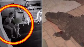 Florida Family Calls Authorities When They Discover A Peculiar Animal At Their Front Door by Did You Know Animals?