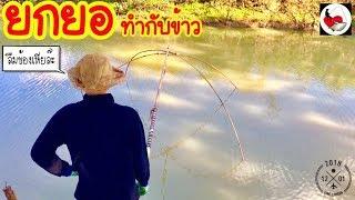 ยกยอ หาปลาต้มส้ม ►Fishing lifestyle Ep.199