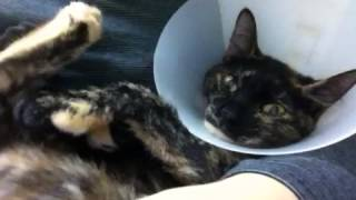 Honey's loud purring - Video Youtube
