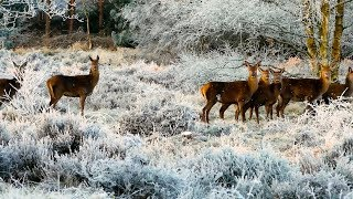 """Peaceful music, Relaxing music, Instrumental music """"Cozy Winter Cabin"""" by Tim Janis"""