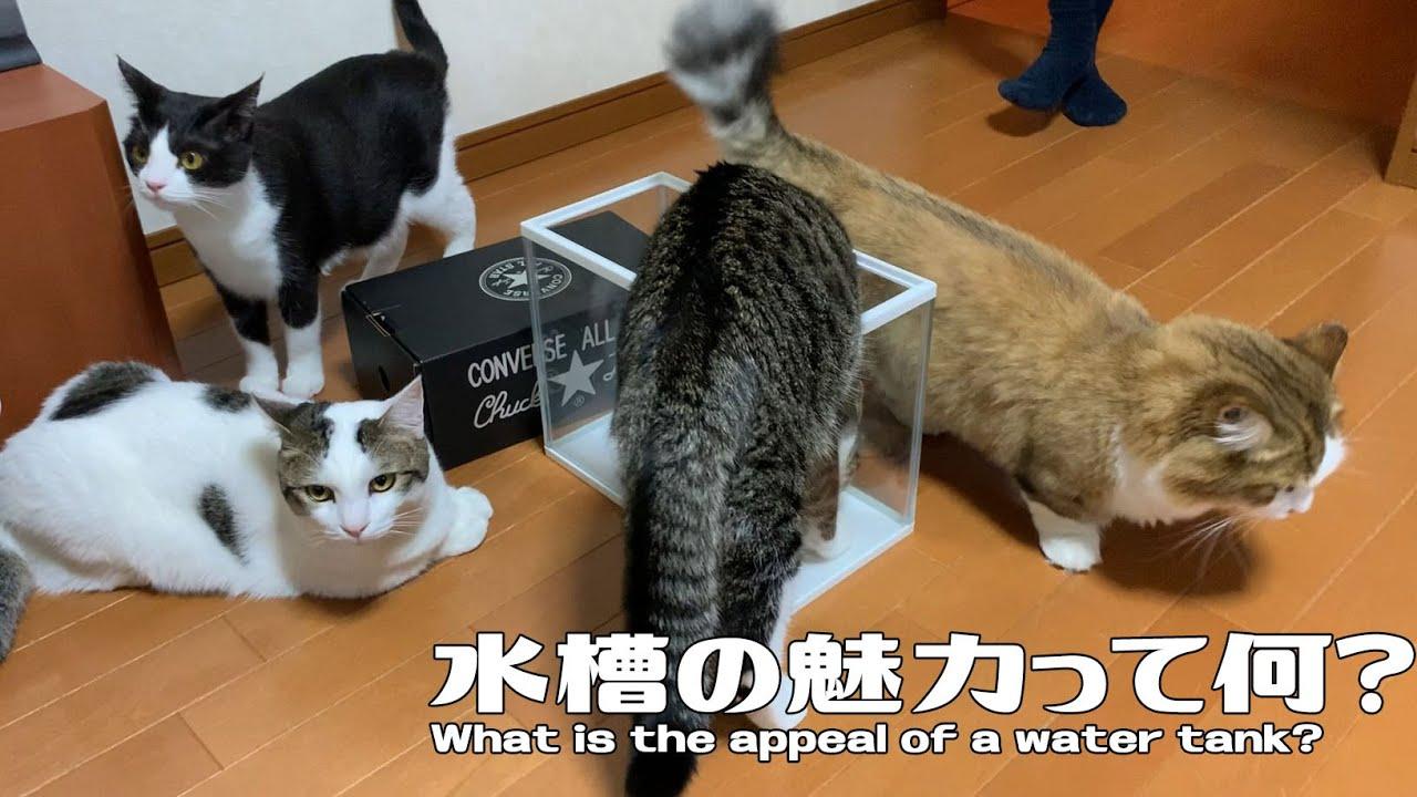 行列のできる水槽に並ぶ猫がかわいい #猫 #cat #行列 #水槽
