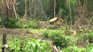 Karen Internally Displaced People Face Food Scarcity