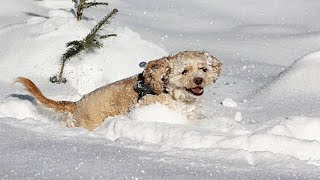 Funniest Dogs In Snow Videos 🤣 [Funny Pets]
