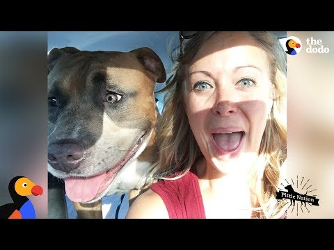 Pit Bull Dog Screams Like A Person When He's Happy | The Dodo Pittie Nation