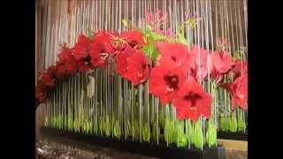 preview picture of video 'Château de Beloeil  Expo   Amaryllis Expo art Floral 2014'