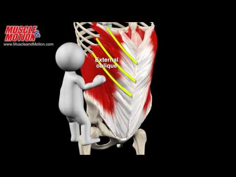 Jak budować mięśnie w fazie głównej po kroku, aby pobrać