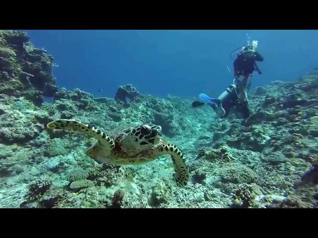 Diving Apo Reef in Mindoro Philippines HD