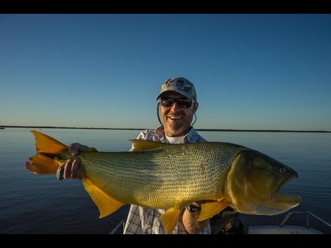 LOOKING FOR GOLD - fly fishing for Golden Dorados