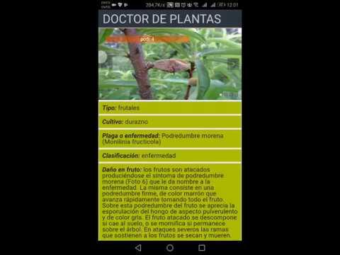 Fautapo crea una aplicación móvil para curar enfermedades de frutales
