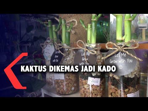 lucu dan unik tanaman kaktus dibuat jadi kado