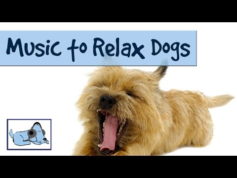 MUSIC TO RELAX DOGS! - TRY IT ON YOUR DOG AND WATCH RelaxMyDog 🐶 RMD01