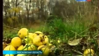 К 190-летию со дня рождения Достоевского. -ZarLife.ru-