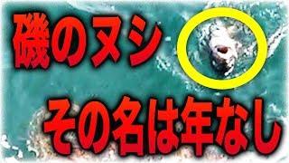 年なしと呼ばれる磯のヌシが現れた石川県で釣り対決#2
