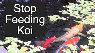 Stop Feeding Koi