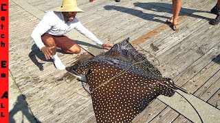 CATCHING GIANT STINGRAY on PIER with NET!