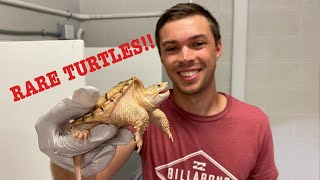 New RARE Turtle/Tortoise Collection!