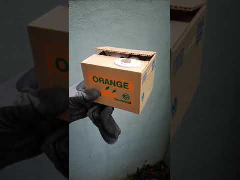 Southland Orange Cartoon Cat Spar Katze Box