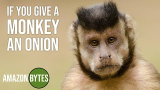 If you give a monkey an onion...
