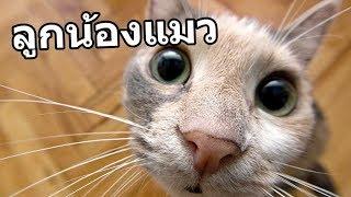 ของขวัญปีใหม่ ''แมว'' ราคาไม่ถึง 5 บาท