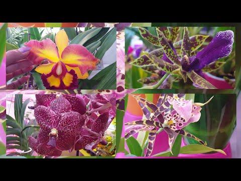Орхидеи открывают новый сезон!  ..шумно, но красиво ))