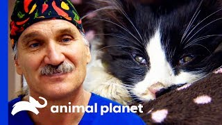 """""""They Say Cats Have 9 Lives... He's Used 7 Of Them!"""" 