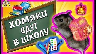ХОМО-ШКОЛА без игрушек все серии подряд | Сказка про Куки и Funny | Хомки | Alisa Easy Pets