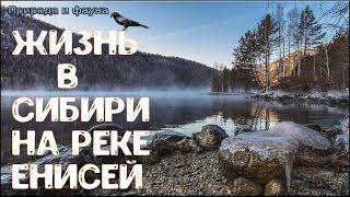 Жизнь в Сибири на реке Енисей. Жизнь в России. Life in Siberia on the Yenisei river. life in Russia