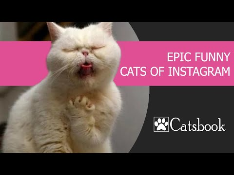 Epic funny cats of Instagram by Catsbook