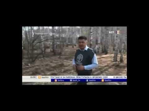 В Башкирии за выходные высадили более 1,5 млн деревьев