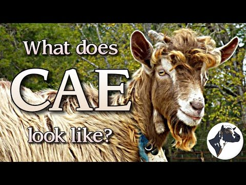 Video What Does CAE Look Like?