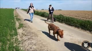 Walking Dog : Première édition !