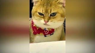 Смешные животные январь 2019 Приколы с животными 2019 #6 Кошки и собаки смехотворная подборка.