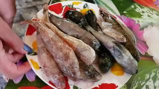 Рыбалка бычки азовского моря и их виды