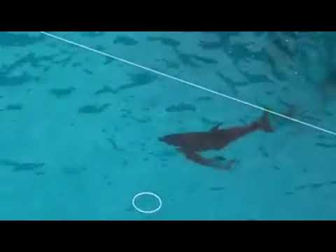 Родила во время шоу самка дельфина в Одессе