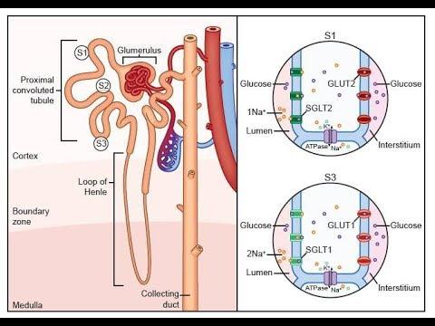 Ischämische Herzkrankheit Bluthochdruck Stufe 2 Risiko 3