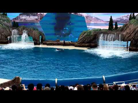 Orca Encounter June 3, 2017