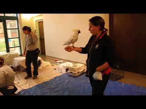 Santa Barbara Prepares to Evacuate Zoo