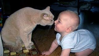 CRAZY KITTEN vs BABIES, get ready for LAUGHING! - FUNNY and CUTE COMPIALTION!