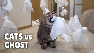 Cats vs Ghost