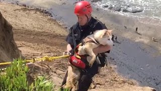 Watch Firefighter Rescue Dog Who Fell Down Cliff