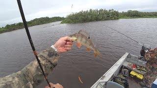 Рыбалка спиннингом 2019. Окунь на джиг, а щука на блесну.