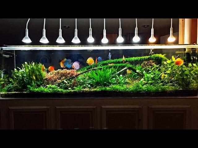 240 Gallon Planted Discus Tank February 2015