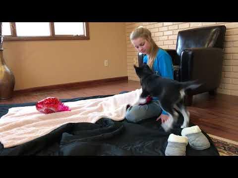 Abella's Video