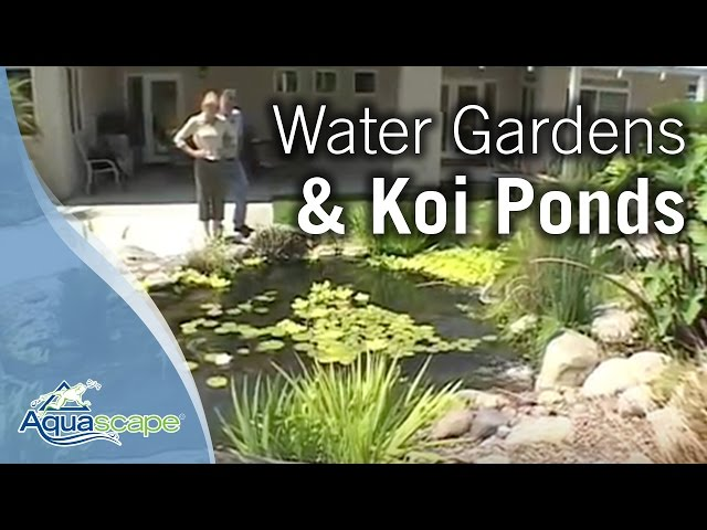 Aquascape Water Gardens, Water Features & Koi Ponds