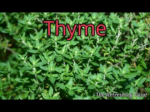 Video Thyme and Thyme Tea Benefits for Health, Hair and Skin - One of Nature's Top Antioxidant Herbs