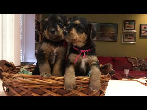 PUPPIES ON NOVEMBER 4 IN A BASKET