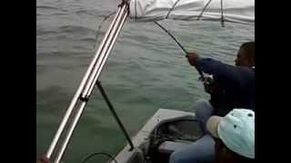 preview picture of video 'Pancing Pari di Port Klang'