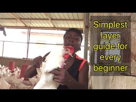 , title : 'Simplest layer guide for every beginner || POULTRY FARMING IN GHANA 🇬🇭 || 2021