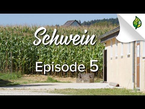 , title : 'SCHWEIN (5/8) - Fütterung